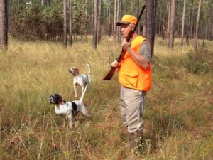 Quail_Hunting_with_Dogs