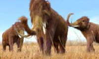 Woolly mammoths, unlike whangdoodles, should stay extinct